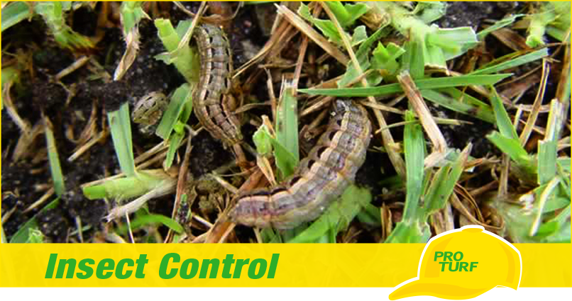 Pro Pest Pest Control Illustration