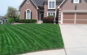lawn care company kansas city example of our service02