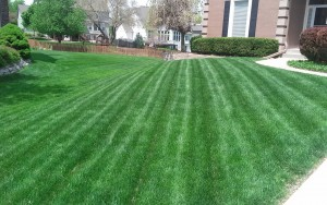 lawn care company kansas city example of our service04