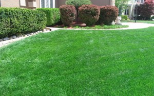 lawn care company kansas city example of our service09